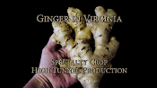 Ginger Seed Stock